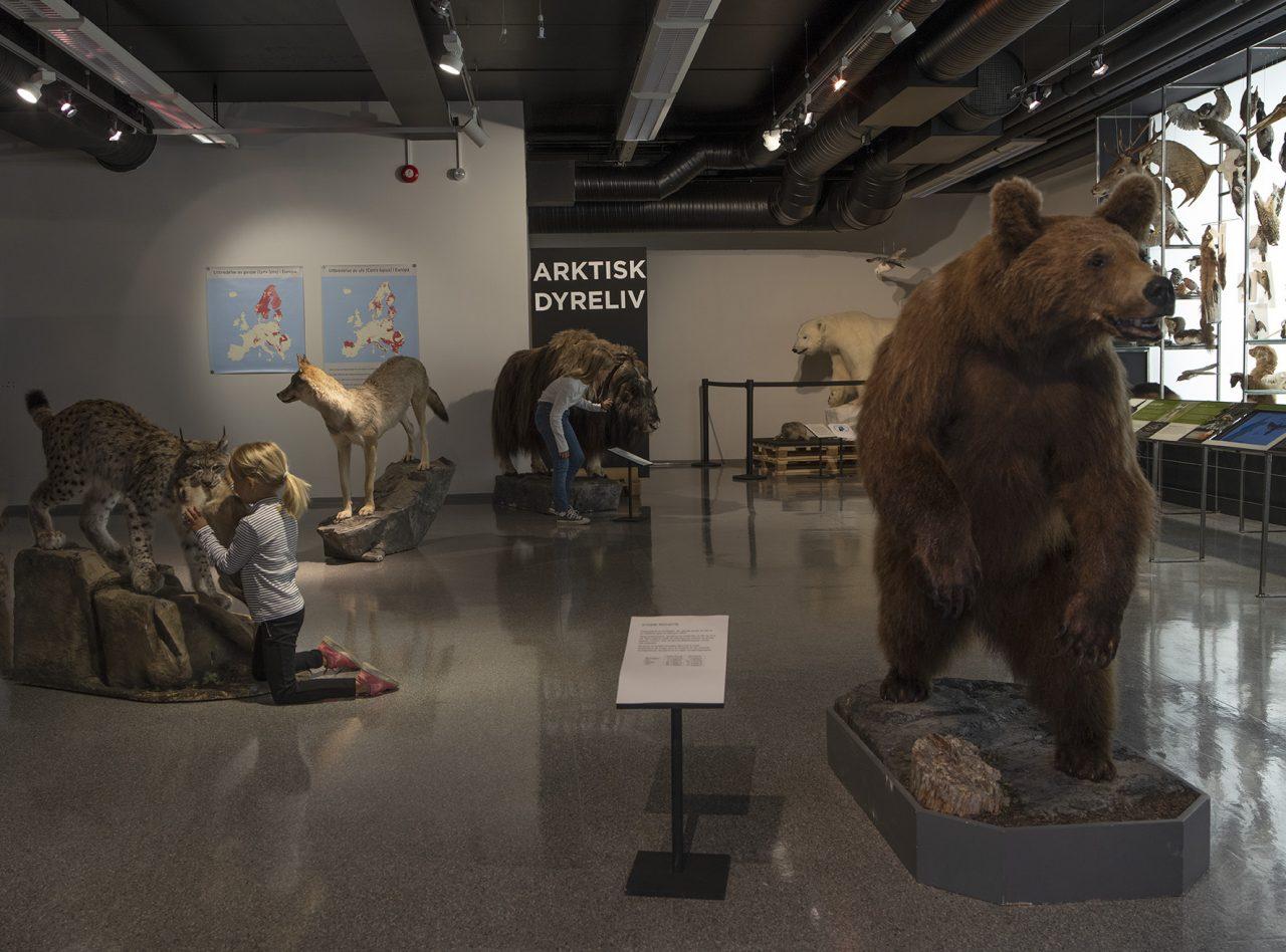 Rovdyr i utstillingen på Rana museum