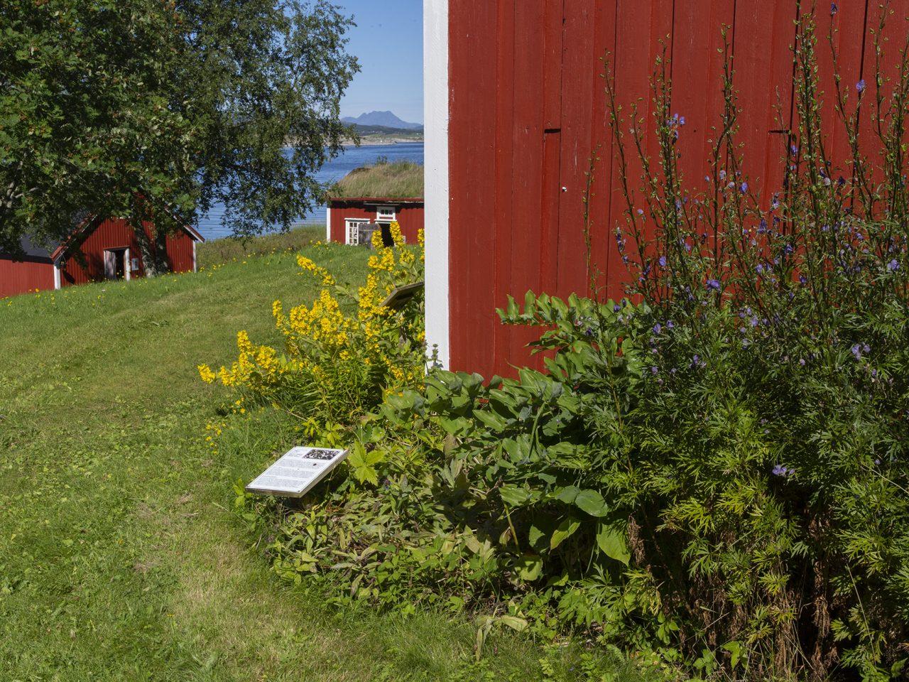 Blomster på Vevelstad bygdetun