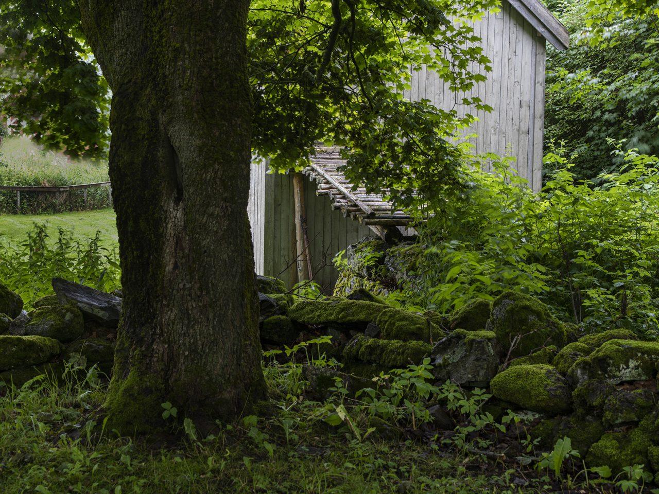 Husmannsfjøset med trær i forgrunnen